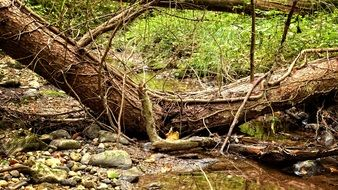 fallen tree by the brook