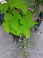 bright green plant leaves