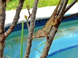 invisible lizard on the tree