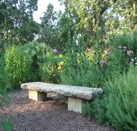 stone bench in a green place