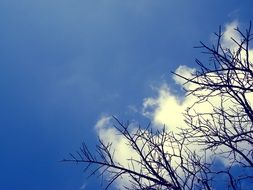 black tree branches, white clouds and blue sky