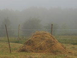 haystack in the fog