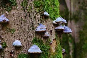 tree fungus close-up