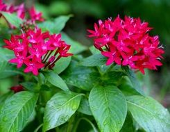 red flowers with green leaves in nature
