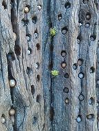 woodpecker hole in a tree trunk