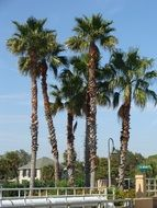 green palm trees on an island in summer