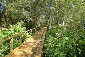 wooden bridge in a green deciduous forest