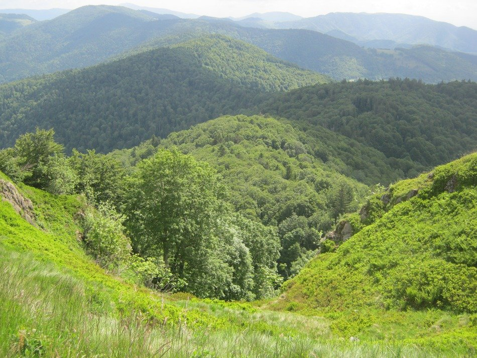 mountains with green forests
