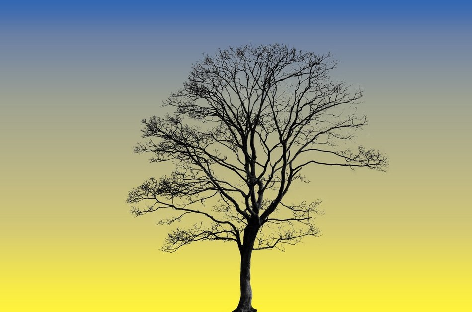 silhouette of a large tree against the yellow evening sky