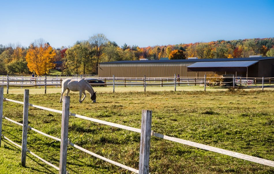 White horse on pasture wooden fence farm view