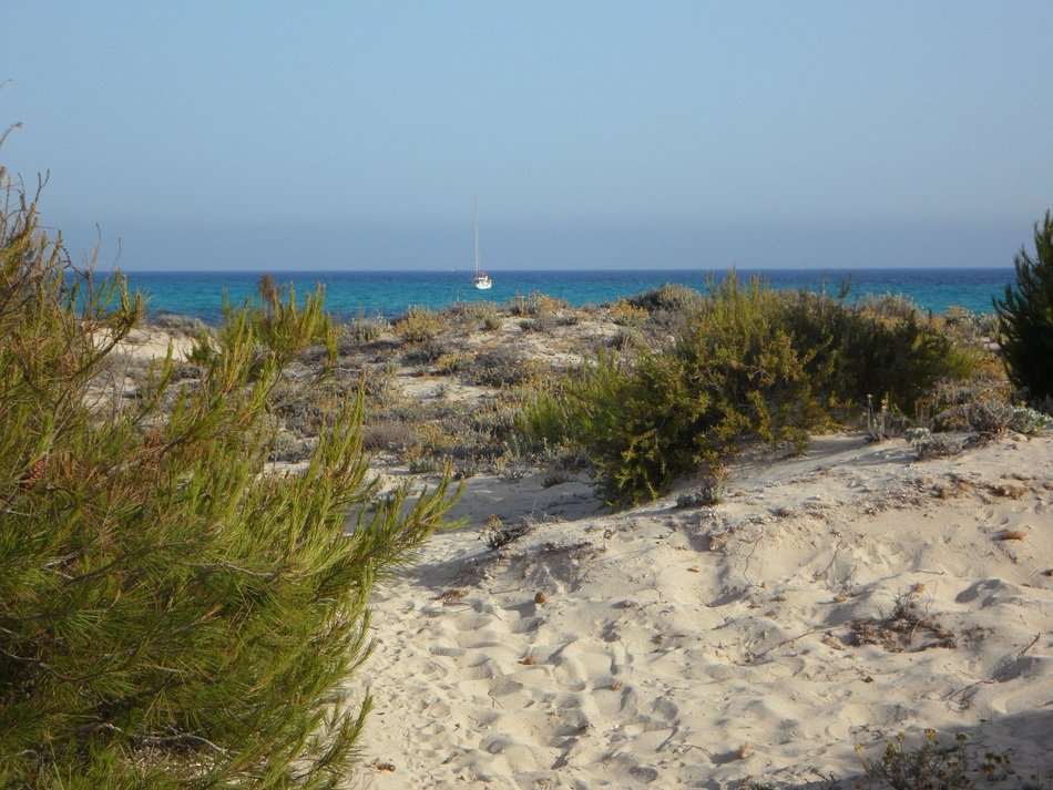 Mallorca sand dune with green grass