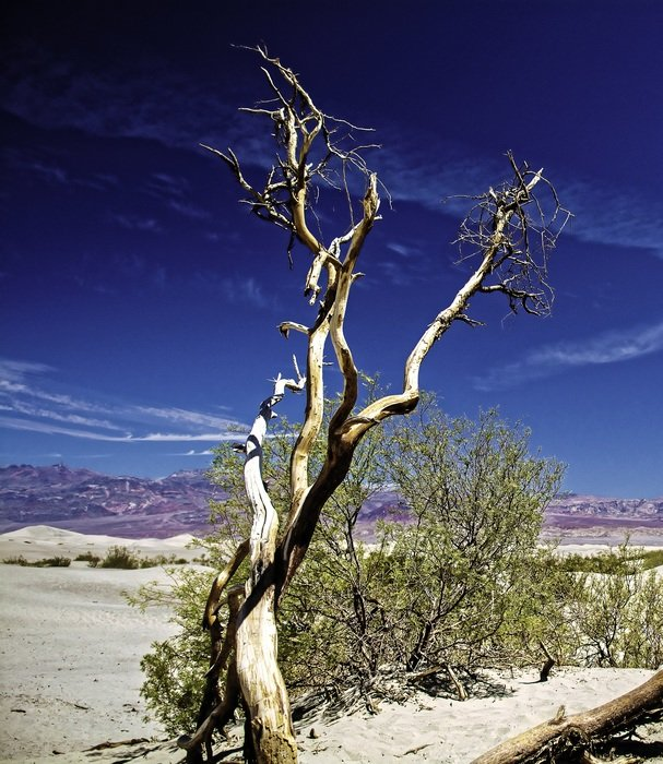 scenic dry tree in desert, usa, california, death valley