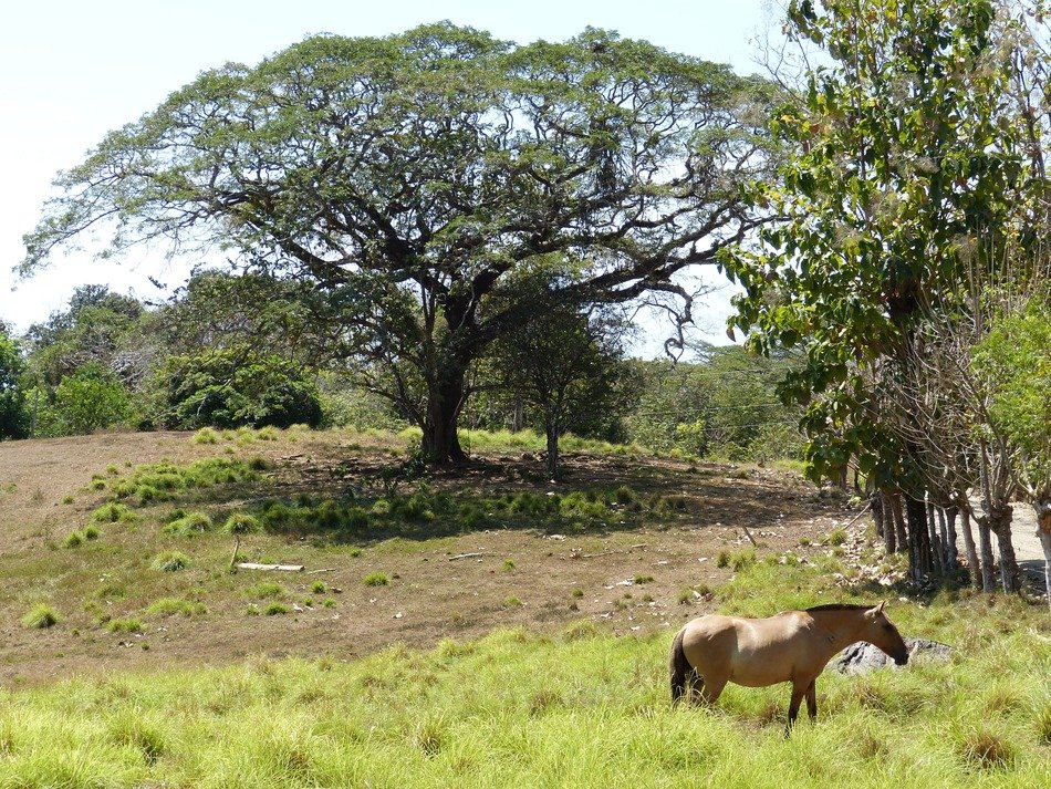 horse among the picturesque nature of central america