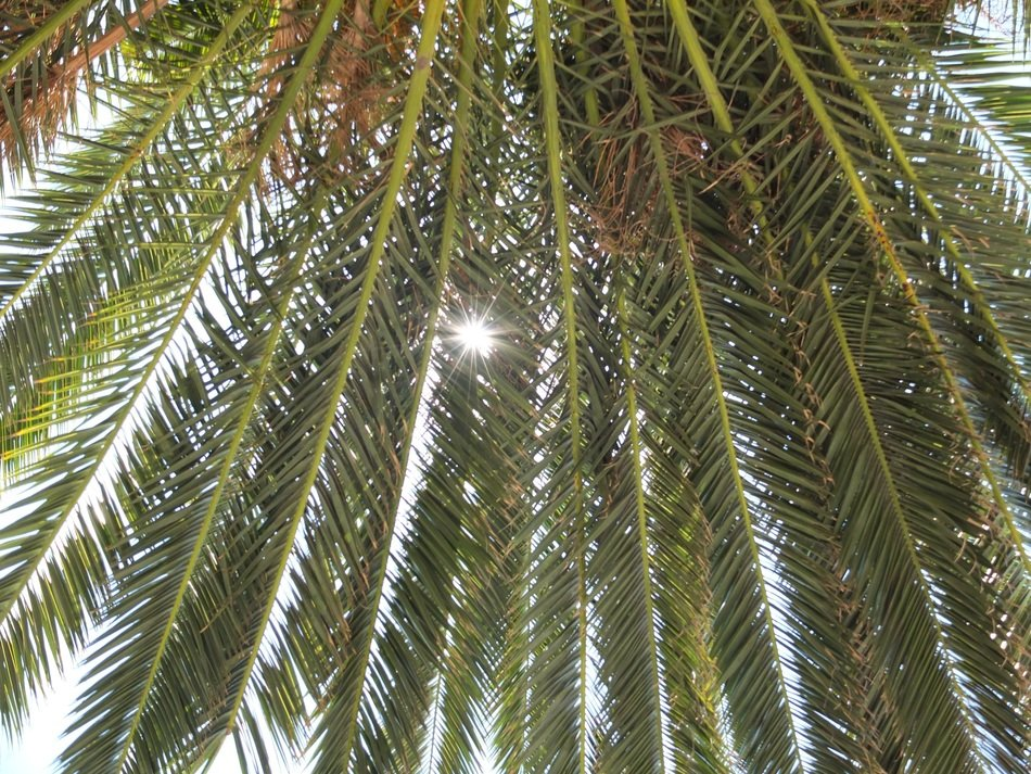 Sunlight through the green palm branches