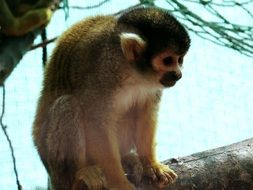 zoo squirrel monkey animal mono