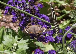gray butterfly on bright blue colors