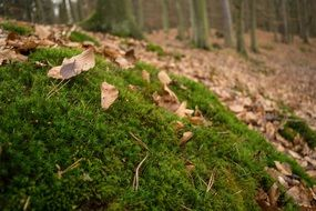 Green moss autumn forest leaves