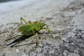 green insect on a stone close-up