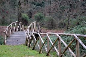 bridge ponte di legno in the forest