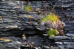 grass and moss on black rock