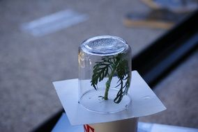 plant sweating biochemistry experiment