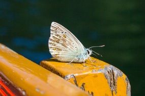 white butterfly on a yellow surface