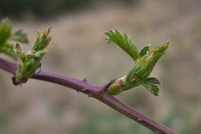 young tree shoots in spring