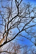 crowns of bare trees in forest at sky