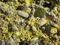 lichen and moss on stones
