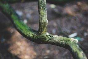 dry branch of a tree