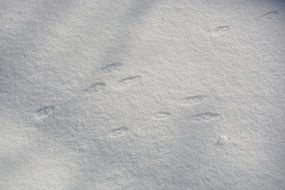 rabbit footprints on sunny snow