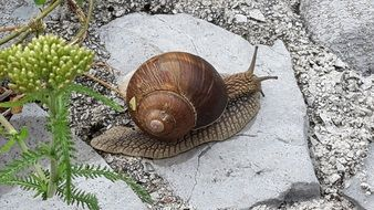 Large snail on a stone