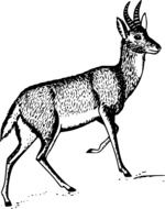 black and white drawing of antelope