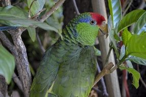 Colorful parrot in green branches