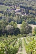 panorama of vineyards in tuscany