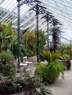 glasshouse greenhouse plant