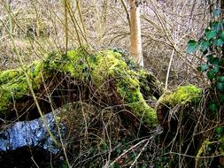 moss on a fallen tree in the wild