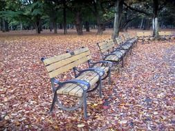 benches in fall park scene