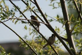 two little birds on a branch in spring