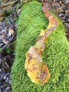 autumn leaves on green moss in october