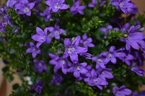 bright purple small flowers
