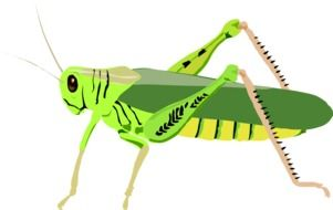 green grasshopper, illustration
