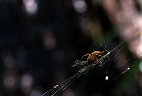 spider on a web in the garden
