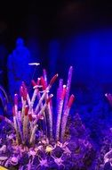 colorful marine coral landscaping
