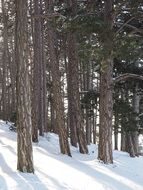photo of pine forest in winter