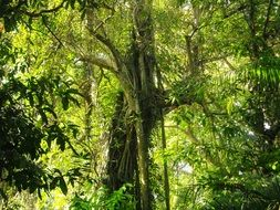 lush green tree in the forest