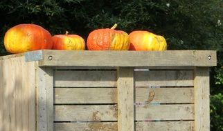 bright pumpkins on a wooden stand