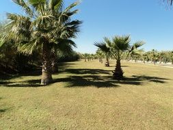 palm trees in a meadow in antalya