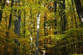 autumn in the deciduous forest