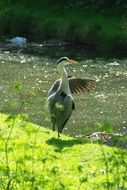 Photo of heron bird in a wildlife